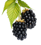 Black raspberry - ginger balsamic vinegar - Monadnock Oil and Vinegar, LLC
